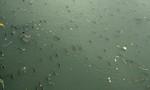 Hàng triệu con cá nổi trên kênh Nhiêu Lộc đớp không khí
