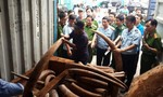 Hơn 2 tấn ngà voi cất giấu tinh vi trong các khối gỗ tuồn về Việt Nam