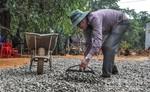 Nguồn hàng khan hiếm, hạt điều khô tăng giá