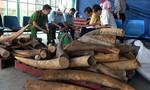Lại phát hiện gần 500kg ngà voi nhập lậu tại cảng Cát Lái