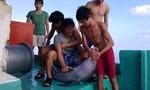 Nhóm ngư dân sát hại cá heo có thể bị phạt đến 100 triệu đồng