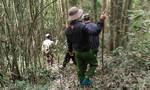 Một người mất tích khi vào rừng chặt cây
