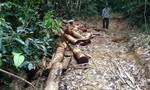 Tan hoang rừng phòng hộ La Ngà