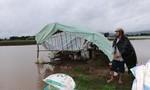 Thủy điện xả lũ cùng mưa lớn khiến hàng trăm héc ta cây trồng ngập lụt