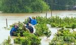7 người thương vong do mưa lũ