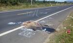 Tạm giam lái xe gây tai nạn chết người rồi bỏ trốn