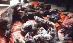Phát hiện 2 vụ tàng trữ, vận chuyển số lượng lớn động vật hoang dã quý hiếm