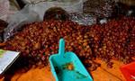 Đột kích cơ sở sản xuất mứt tết bẩn ở Sài Gòn