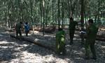 Bắt giữ khối lượng lớn gỗ lậu quý hiếm cất giấu trái phép