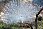 Thông tin chính thức của Vinpearl Safari Phú Quốc: Thông tin hàng ngàn động vật chết hoàn toàn sai sự thật