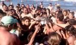 Cá heo con chết ngay sát biển vì bị người dân đem ra làm vật chụp ảnh 'tự sướng'