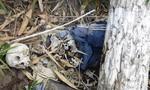 Bí ẩn xác chết chỉ còn xương khô giữa rừng sâu