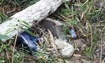 Tổng hợp ANTT ngày 23-2: 'Yêu râu xanh' hiếp dâm bé gái lớp 7; Xác chết bí ẩn giữa rừng