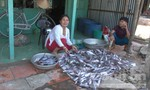 Cá chết 'hàng loạt', nông dân thiệt hại hàng trăm triệu đồng