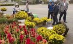 Thành Phố Tam Kỳ rực rỡ trong sắc hoa Tết