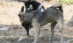 Một địa phương phát hiện 10 người bị chó dại cắn