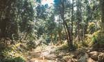 Trốn trại, phạm nhân băng rừng vẫn không thoát