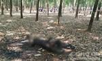 Nghi án giết người rồi đem đốt xác phi tang ở rừng cao su