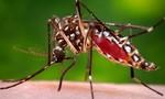 Bộ Y tế làm việc với tỉnh Bình Thuận về vụ du khách Úc bị nhiễm virus Zika