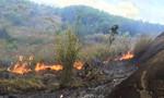 Huy động mọi nguồn lực chữa cháy núi Chứa Chan