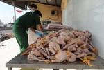 Phát hiện 200kg gà đang phân huỷ nặng
