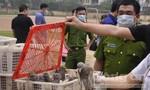 Nhập lậu 4.000 con chim bồ câu từ Trung Quốc về Việt Nam tiêu thụ