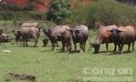 1.000 tỉ xây dựng Công viên bảo tồn động vật hoang dã Tây Nguyên
