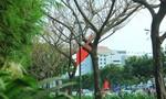 Hàng cây trước cổng sân bay chết một cách đáng ngờ?