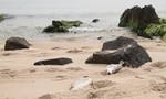 Bộ Tài nguyên- Môi trường bất ngờ hủy họp báo vụ cá chết