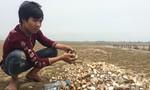63 tấn ngao chết bất thường trên biển Hà Tĩnh