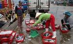 Đà Nẵng họp khẩn tìm giải pháp cứu ngư dân thoát khỏi vụ cá chết