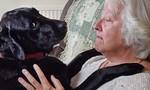 Chi 80.000 euro mua hai con chó có khả năng khám phá ung thư