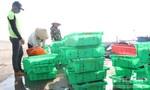 Công bố kết quả kiểm nghiệm 8 mẫu hải sản không có cyanua và phenol
