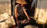 Cảng cá Nhật Lệ, chợ cá Đồng Hới: Mặt hàng cá bắt đầu được tiêu thụ