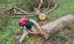 """Lâm tặc """"cày"""" nát rừng thông, chính quyền địa phương không biết"""