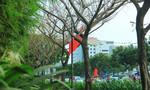 TP.HCM xử lý nghiêm các trường hợp phá hại cây xanh