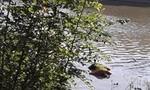 Phát hiện xác nam thanh niên mặc áo cầu thủ nổi trên sông Lam