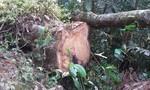 """Kon Tum chỉ đạo xử lý tình trạng rừng bị """"xẻ thịt"""" được báo chí phản ánh"""