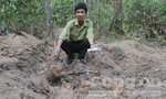 Rừng gỗ trắc độc nhất vô nhị ở Việt Nam kêu cứu