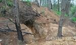 Vàng tặc lộng hành, băm nát rừng nguyên liệu giấy