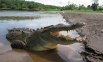 Vớt được thi thể bé trai 2 tuổi bị cá sấu kéo xuống hồ