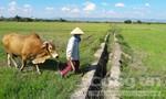 Công an tỉnh Gia Lai vào cuộc vụ kê khống công trình tiền tỷ bắt dân đóng từng ký lúa