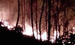 Huy động hàng trăm người dập lửa cháy rừng trong đêm