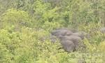 Kỷ niệm với nghề báo: Đêm mưa gió vượt rừng 'tiếp' voi