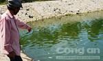 Cá rô phi chết nổi trắng hồ Nguyễn Du