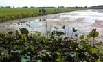 Đồng bằng sông Cửu Long sau hạn mặn lịch sử - Kỳ cuối: Trồng sen trữ lũ giữa Đồng Tháp Mười