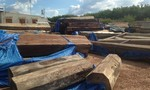 Truy quét gỗ lậu giữa sông: 1 người tử vong, 2 kiểm lâm bị thương
