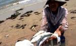 Chiều nay, chính phủ công bố nguyên nhân cá chết hàng loạt