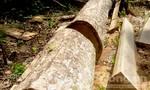Xử lý nghiêm đối tượng phá rừng tự nhiên trái phép