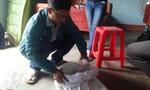 Phát gạo hỗ trợ, người dân cho gia cầm ăn vì không nuốt nổi